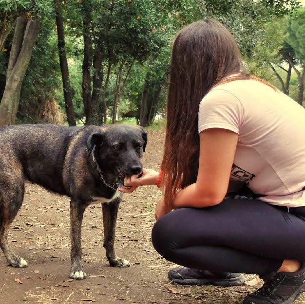 Addestramento cani tartufo roma (10)