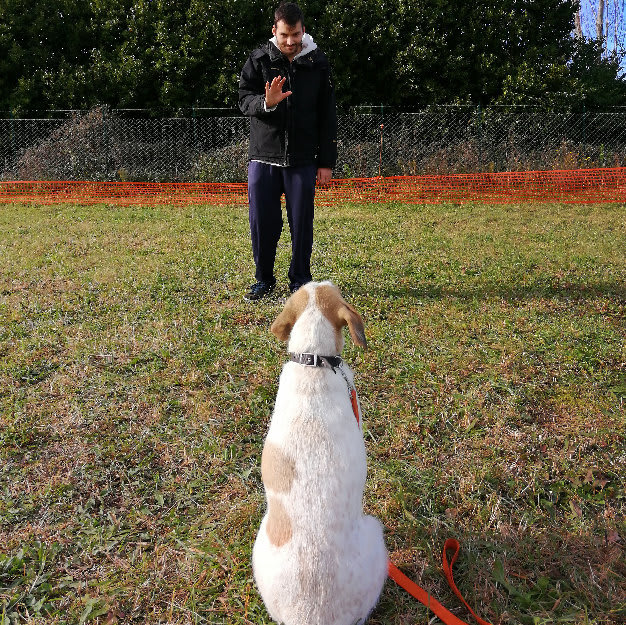 Addestramento cani tartufo roma (5)