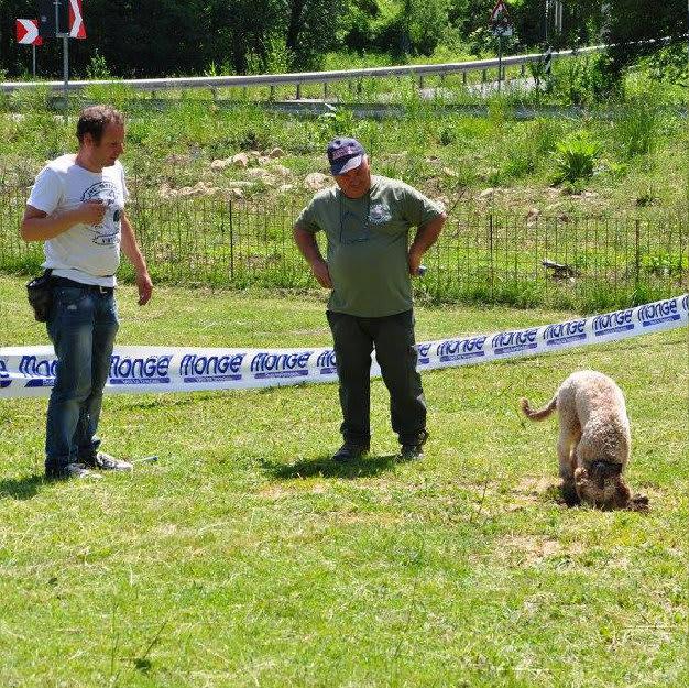 Addestramento cani tartufo roma (6)