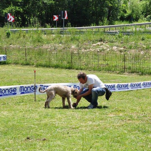 Addestramento cani tartufo roma (7)