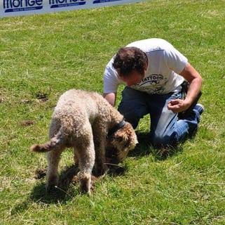 Addestramento cani tartufo roma (8)