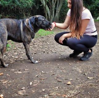 Addestramento cani tartufo roma (9)