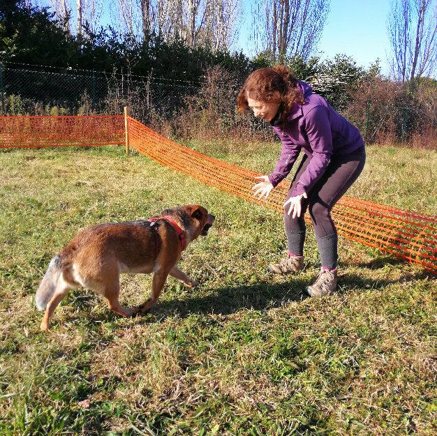 Testimonianze-04 Discovering Truffles addestramento cani tartufo