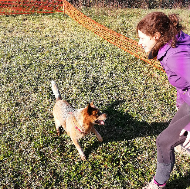 Testimonianze-05 Discovering Truffles addestramento cani tartufo