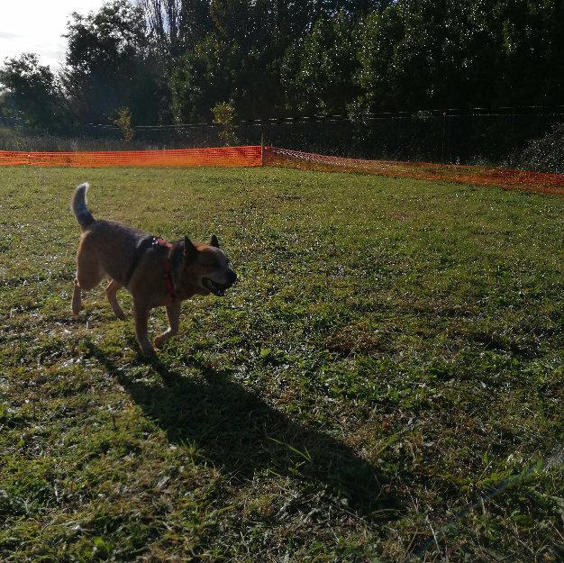 Testimonianze-06 Discovering Truffles addestramento cani tartufo