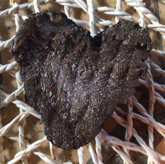 Tour scoperta tarufi Discovering Truffles 6